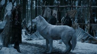 © Ghost, le loup de Jon Snow.